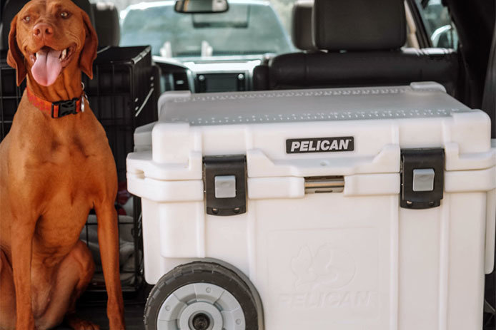 Dog with Wheeled Cooler